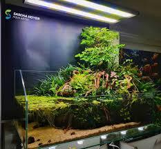 Paludarium, Seni Ekosistem 2 Alam dalam 1 Kotak Kaca